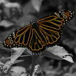 """""""Electric Butterfly"""" by MindsEyeImagery"""