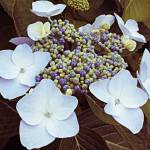 """white flowers"" by vandann04"
