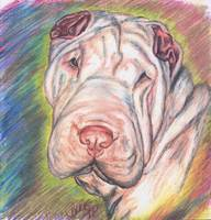 Shar Pei In Color