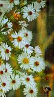 White and Green Asters