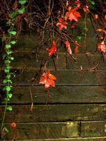 Retaining Wall in Autumn