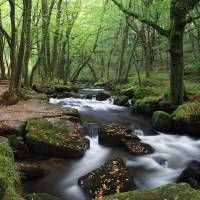 Golitha Falls Art Prints & Posters by Carl Whitfield