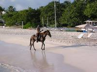 Man on Horse on Anguilla Beach