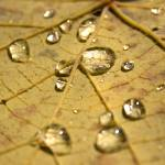 """raindrop leaf"" by keithwick"