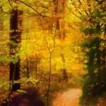 """""""Autumn Glow"""" by LutzBaar"""