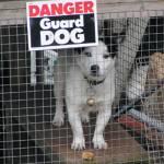 """""""Highland Guard Dog"""" by roshven"""