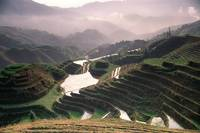 Dragon's Backbone Rice Terraces of Longji