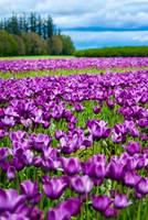 Purple by Marcus Panek