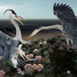 """Fighting Birds"" by madamefirefly"