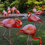 """PInk Flamingos"" by La_Cruz_Photography"