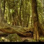 """""""Old Tree"""