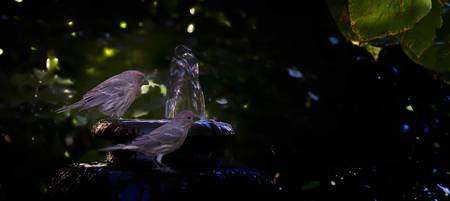 Finches and fountain