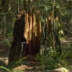 """Big Stump"" by LanceIFitzsimmons"