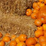 """Pumpkins on Hay"" by GlendinePhotography"