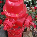 """Red Fire Hydrant"" by NaturesArtPhotography"