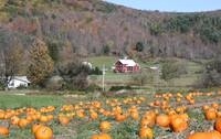 Pumpkin Patch 2