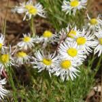 """""""Wild Flowers"""" by maj"""
