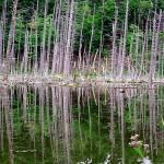 Adirondack State Park stream