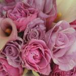 """""""Shades of Pink"""" by PatrickAltman"""