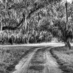 """coosaw road b&w"" by Hansen"