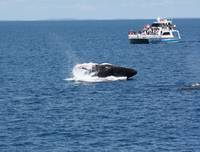 NaP_ Whale Watching170a
