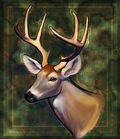 Portrait of a Deer