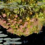 """Ladew Garden Hydrangea Pond Reflection"" by McallenPhotography"