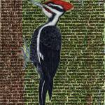 """woodpecker"" by sbuschman"