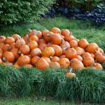 """Pumpkin  Pile"" by GlendinePhotography"