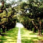 """Oak Alley"" by sharonblanchard"