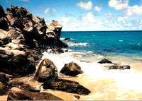 Beach at the Ritz Carlton, Maui Hawaii