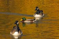 Friends on Golden Pond