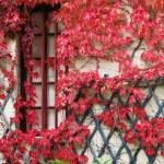 """Fall Leaves II, Chateau Chenonceau, France"" by RandiKuhne"