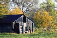 Barn in the Autumn