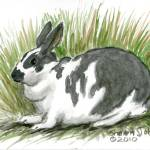 """""""Bunny in the Grass"""" by revelation_art_studio"""