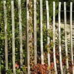 """""""Fence"""" by eflynn"""