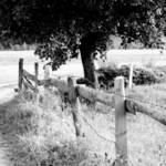 """Fence"" by adphotography"