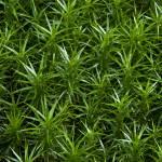 """""""Plantscapes - Tiny trees"""" by ankimo"""