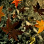 """""""Falling leaves"""" by MattBoes"""