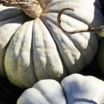 """Spooky Pumpkins"" by judystalus"