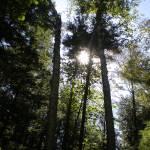 """Sun through trees"" by NatalieRobinson"