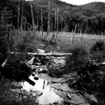 """""""Stream in pasture"""" by NatalieRobinson"""