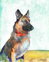 German Shepherd Portrait by Riccoboni