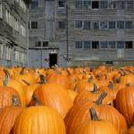 """Pumpkin Prison Yard"" by chrisromano"