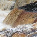 """Tahquamenon Falls"" by NikkiLeck"