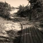"""""""Trail 1"""" by eflynn"""