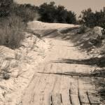 """""""Trail 3"""" by eflynn"""