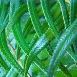 Fern art prints Green Forest Ferns Baslee Troutman