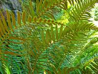 Ferns art prints Green Forest Fern Baslee Troutman