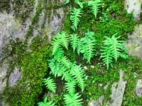 Forest Ferns on Rock Slate Green Fern Baslee